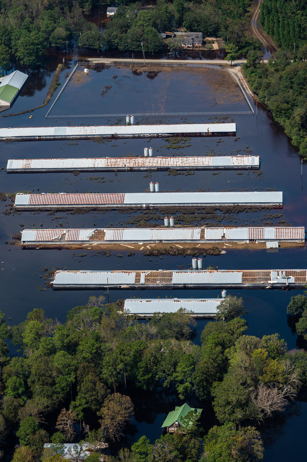 An industrial farm affected by flooding from Hurricane Florence in Duplin County, N.C.