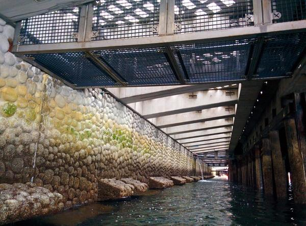 <p>A view of the new seawall being installed on the Seattle waterfront. It's designed to help juvenile salmon.</p>