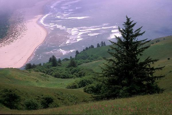 <p>The view from Cascade Head Overlook on the Oregon Coast.</p>
