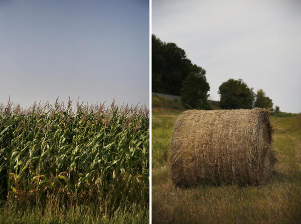 North Dakota farmland in and around Minto.