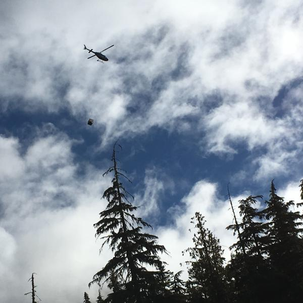 A 300-pound billy goat takes to the air, by crate, bound for its new home in the North Cascades.