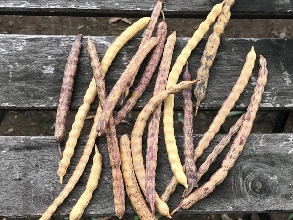 Roasting mesquite beans brings out the flavors of chocolate, coconut and baking spices.