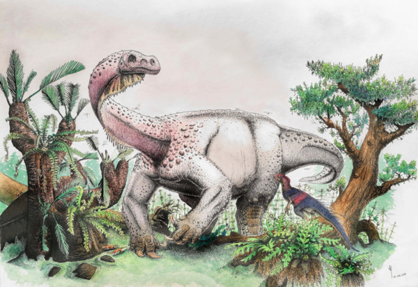 "An artist's reconstruction of <em>Ledumahadi mafube, </em>which means ""a giant thunderclap at dawn,"" foraging during the early Jurassic in South Africa."