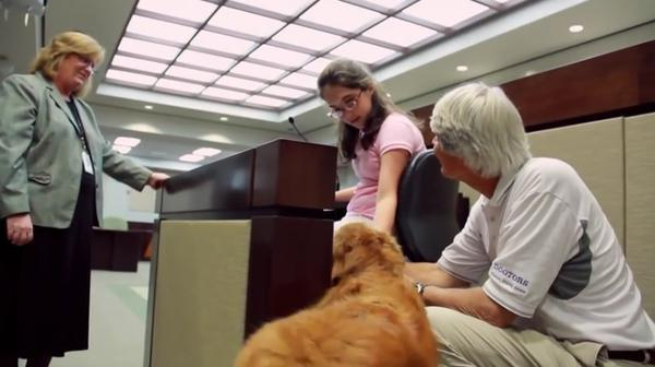 Therapy dogs, like this one at a Florida courthouse, are now helping anxious travelers at Miami International Airport.