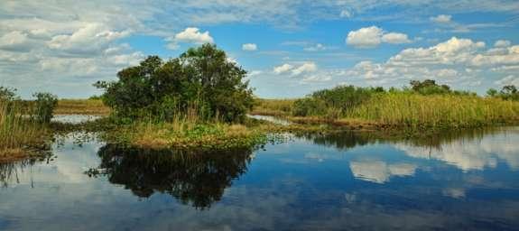 Fruit flies were originally found in Miami at farms near the Everglades.