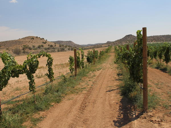 Wine grapes grow in Montezuma County's McElmo Canyon, a hotbed of water conflict according to Huhn.