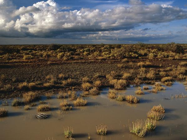 A semi-desert steppe after a storm, between Trelew and Las Chapas, Patagonia, Argentina.