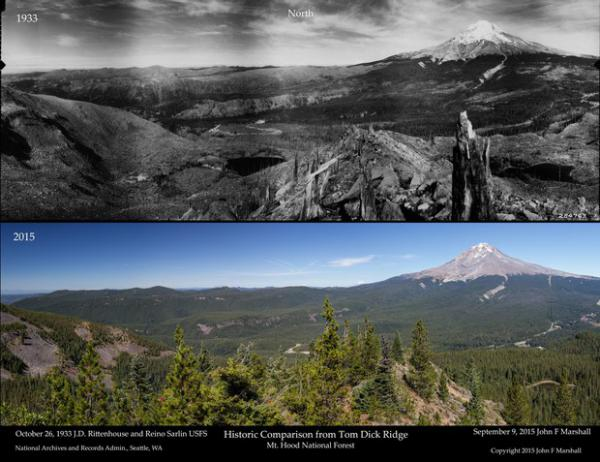 <p>A comparison of the forest density on Mount Hood in 1933 and 2015.</p>