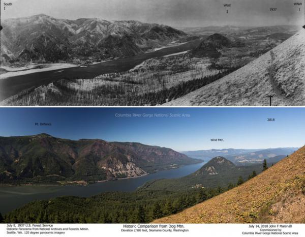 <p>A comparison of the Columbia Gorge forests in 1933 and 2015, as seen from Dog Mountain.</p>