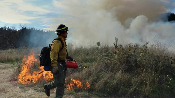 <p>The Karuk Tribe has partnered with other local organizations like the MId Klamath Watershed Council and Klamath River TREX to reintroduce fire to the land with prescribed burns.</p>