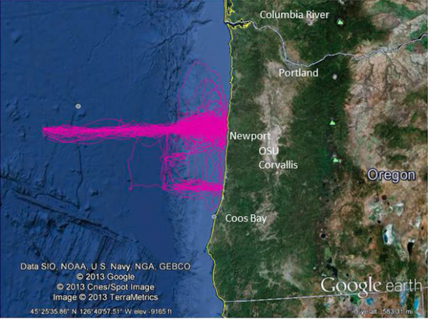 <p>Pink lines show the path of a recent trip by the Slocum Glider.</p>