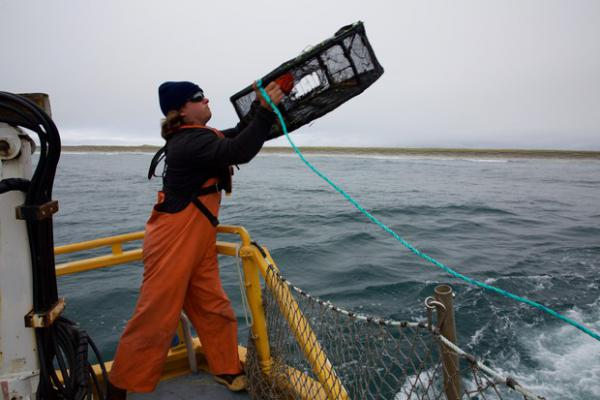 <p>A deck hand on the Forerunner research vessel throws a crab pot out in the hope of collecting more information on the health of the local crab population.</p>