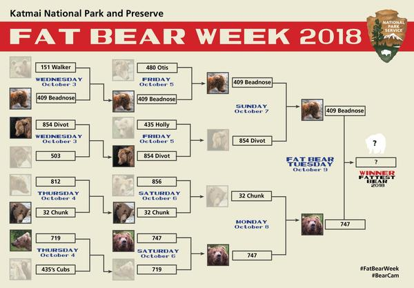 The Fat Bear Week bracket began with 12 bears and ended with one glorious winner on Tuesday night: 409 Beadnose.