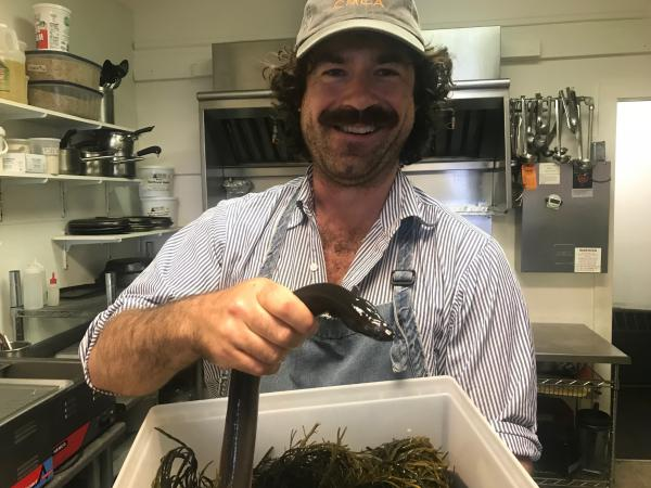 Sam Richman, owner-chef of Sammy's Deluxe restaurant in Rockland, says his patrons tend to prefer full-grown unagi smoked, European style, rather than as Japanese sushi.