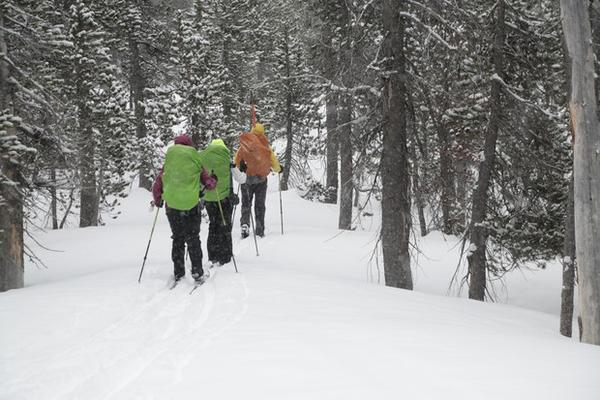<p>Skiing deep into the forest for a three-day hut-to-hut adventure.</p>