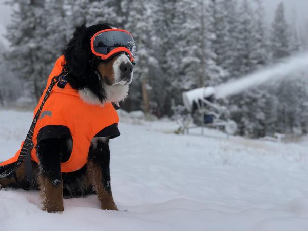 "Loveland Ski Area's ""Parker The Snow Dog"" oversees snowmaking efforts on October 8, 2018."