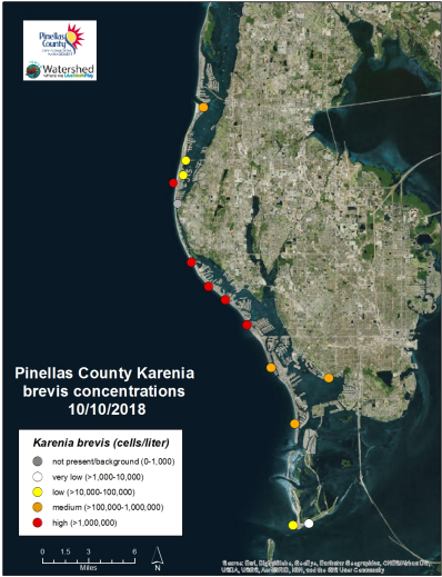 Many Pinellas County beaches reported a high concentration of red tide cells.