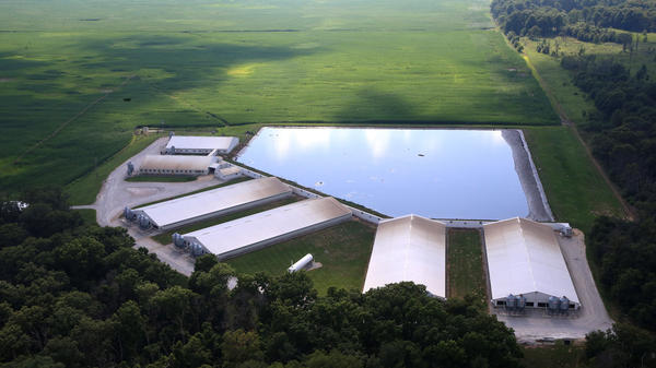 A pig waste lagoon in Iroquois County, Ill.