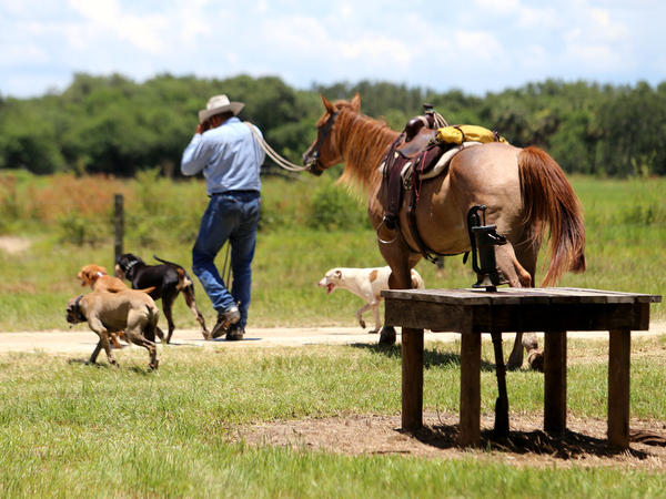 A cowboy with spurs, herd dogs, a horse, and a pump that <em>actually </em>works.