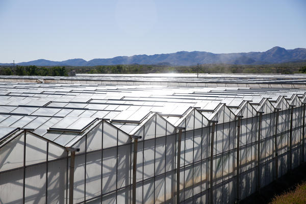Rows of greenhouses at Wholesum Harvest's farm near the tiny town of Los Janos in Sonora, Mexico.