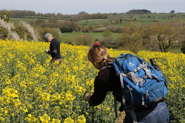 Researchers from the Centre for Ecology & Hydrology in a field of oilseed rape, or canola, in the United Kingdom.