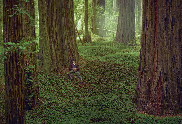 Look closely — that's Brad Pitt photographed among the redwood trees.