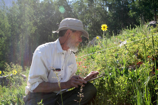 """Ecologist David Inouye says he has counted nearly 5 million flowers in the meadows around the Rocky Mountain Biological Laboratory. He says he sometimes feels like """"the Count"""" from <em>Sesame Street</em>."""