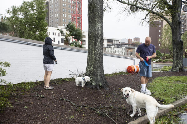 Allison and Mark Potter take their dogs out for a walk. The Potters live in Wilmington and were concerned about old trees falling in the storm.