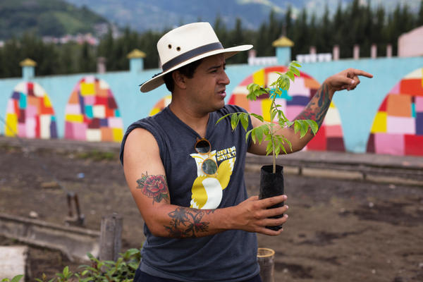 Juan Pablo Romero holds a young plant which, when fully grown, will be used as renewable firewood. <strong></strong>