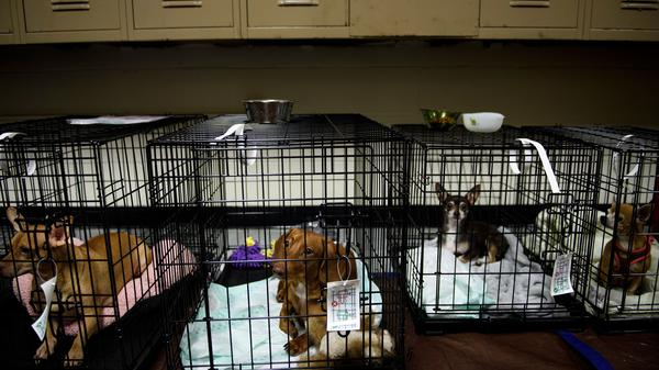 Pets sit in a shelter in Panama City, Fla., as Hurricane Michael approaches the area on Wednesday morning.