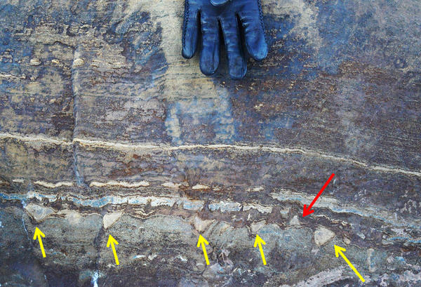 A new analysis of what were initially thought to be microbial fossils in Greenland suggests they might instead just be mineral structures created when ancient tectonic forces squeezed stone. While most of the structures point in one direction, the red arrow shows that some point in the other direction.