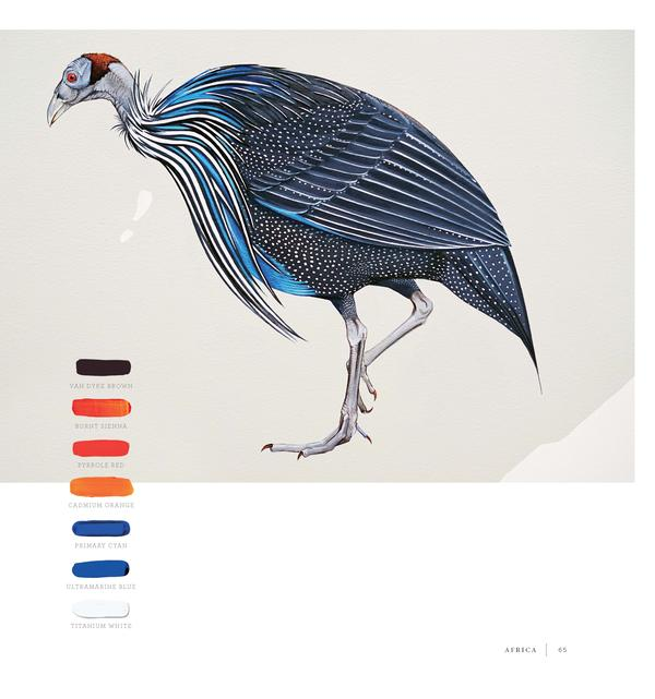 A Vulturine Guineafowl, showing the colors Kim used in her work.