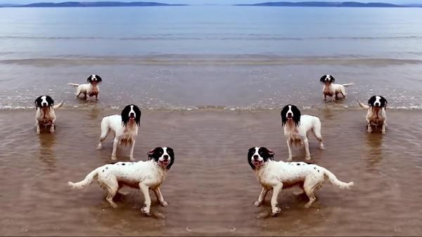 Dogs mingle with the music of Handel in Tilda Swinton's new video.