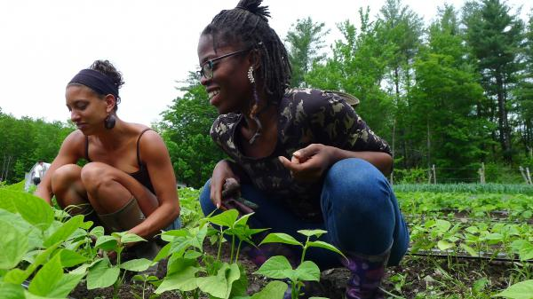 Leah Penniman (left) and Amani Olugbala tend to beans at Soul Fire Farm.
