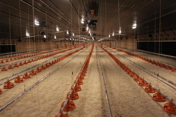 The first set of barns for the Costco project was recently completed near the town of Hooper, Nebraska. Approximately 20,000 breeding hens will be raised here.
