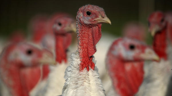 Turkey production peaked at about 6.2 million pounds in 2008, but has since remained stable.