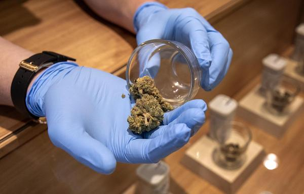 A marijuana sample at Cultivate (Robin Lubbock/WBUR)
