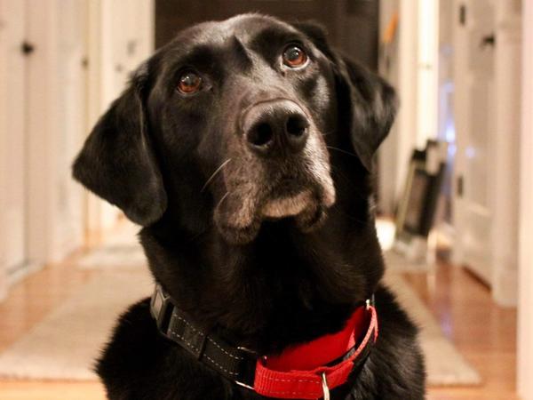 Tucker, a family friend of NPR's Emily Dagger.