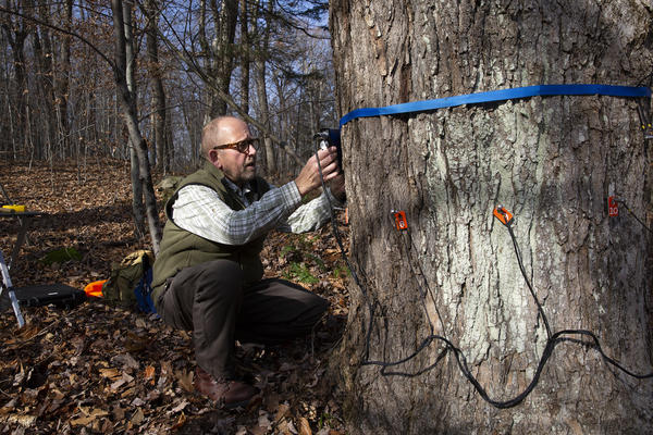 "Forest pathologist Bob Marra demonstrates equipment used to internally scan trees. ""If we're going to look to forests as a way to sequester carbon, we should develop much more accurate estimates of how much carbon is actually sequestered,"" Marra said."