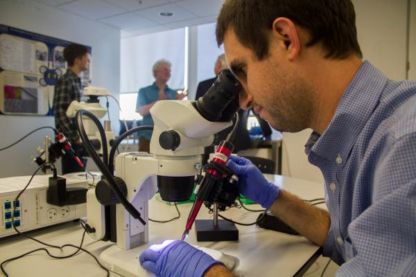 George Washington University research assistant Chris Day positions a needle to inject CRISPR Cas9 and guide RNA into butterfly eggs.