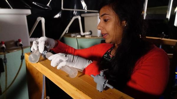 <p>OSU's Maryam Kamran is conducting research on salmon olfactory homing in an effort to prevent hatchery fish on the Elk River from straying. </p>