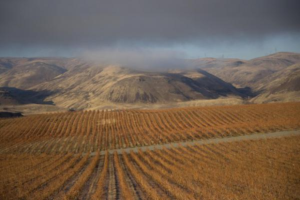 <p>Orchards and vineyards are shown along the Columbia River on Tuesday, Nov. 20, 2018, near Rock Island.</p>