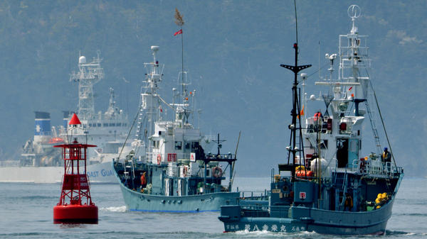 A Japanese whaling fleets leaves the city of Ishinomaki in April 2014 as a Japan Coast Guard vessel provides security.