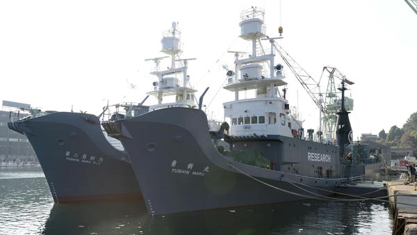 """Japan once labeled its whaling vessels with prominent """"Research"""" tags. The country will resume commercial whaling hunts in 2019. Here, the whaling ships Yushin Maru (right) and Yushin Maru No. 2 are seen before leaving for the Antarctic Ocean for a whale hunt in 2015. In the future, Japanese whaling ships will not operate in the Antarctic."""