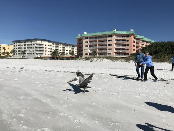 Specialists said some of the seabirds had been rehabilitated for a while, but they were waiting for red tide to disspiate before freeing them back into Gulf waters.