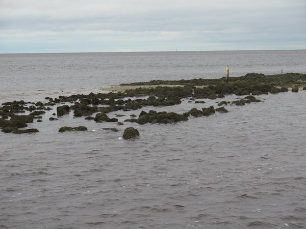 As oysters have died off their reefs have degraded, losing several inches a year. Scientists are building them back up using rock from a quarry.