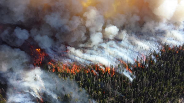 A wildfire burns in Yellowstone, 2013.
