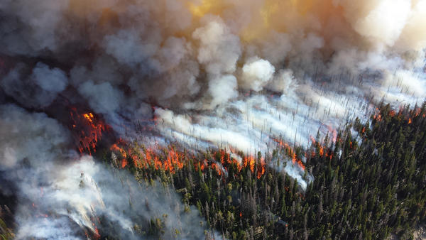 A wildfire burns in Yellowstone, 2013