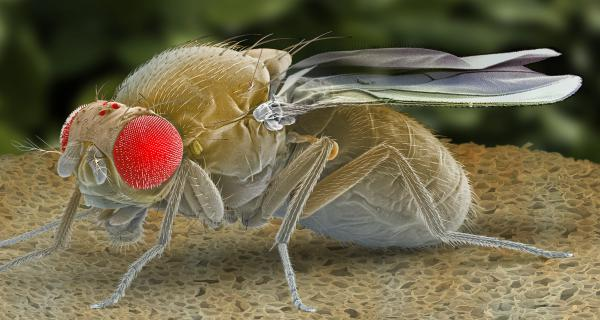 After scientists screened over 8,000 genes in fruit flies, only one, which hadn't been described before, triggered sleepiness.