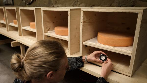 Simon Walker, a student at the Bern University of the Arts in Switzerland, checks a small music speaker placed directly below a wheel of Emmental.